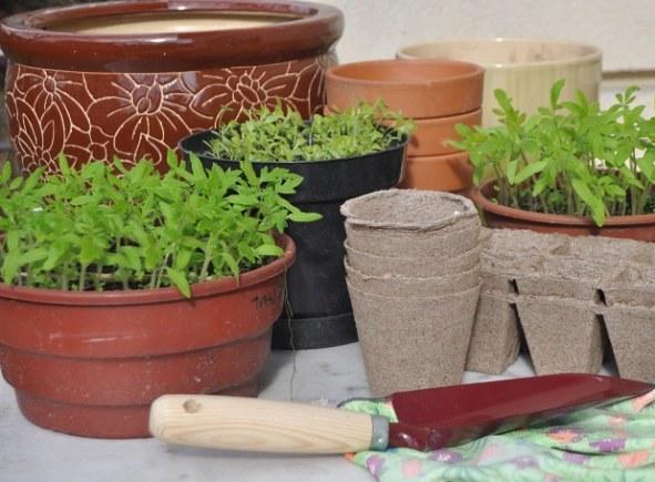 Pikowanie roślin