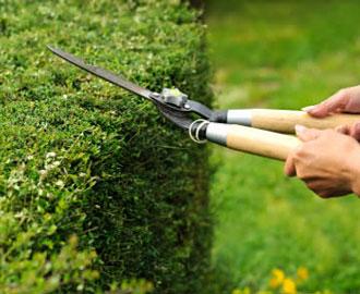 Przycinanie żywopłotów- kwiecień w ogrodzie
