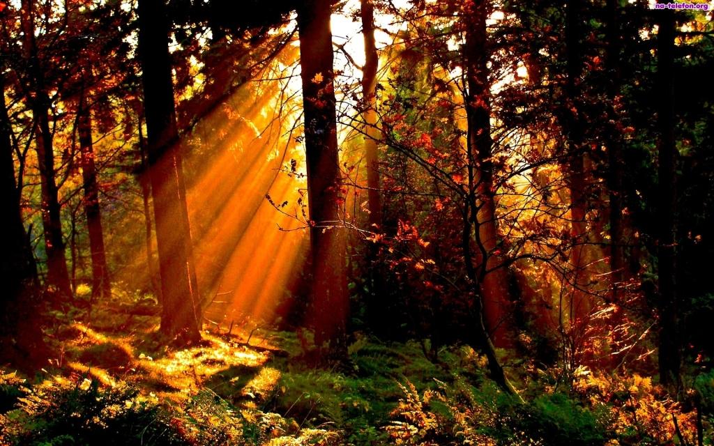 Zasady zalesiania