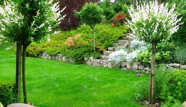 Szczepione Liściaste Sklep Ogrodniczy Sadowniczypl