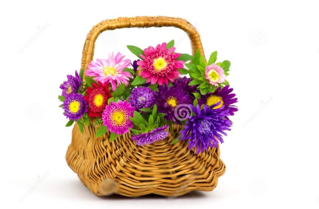 Polecamy do uprawy kwiatów astrów polecamy nasze nasiona astrów! Gwarantujemy wysoką jakość! Zapoznaj się z szerokim wyborem odmian astrów!
