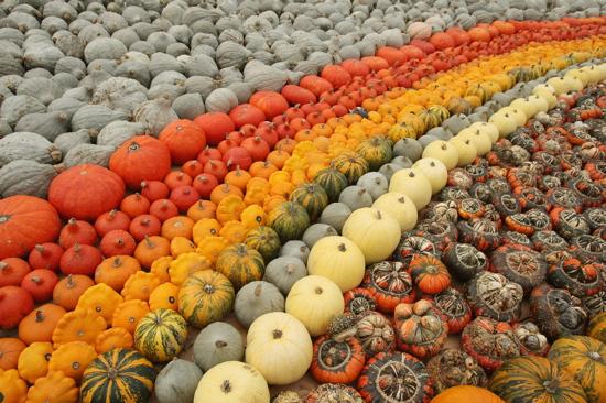 Polecamy nasiona dyni ozdobnej! Uprawiaj te niezwykłe owoce i ozdabiaj nimi swój dom! Sprzedajemy sprawdzone wysokiej jakości nasiona dyni ozdobnych. Sprawdź sam! Zapraszamy.