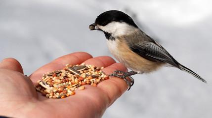 Dokarmianie ptaków zimą to jedno z bardziej ciekawych zajęć jakie możemy robić! Pomóżmy ptakom przeżyć ten trudny okres i dokarmiajmy je dobrym pokarmem dla ptaków! Poznaj naszą ofertę i sprawdź nasze niskie ceny! Gwarantujemy wysoką jakość i szybką dostawę!