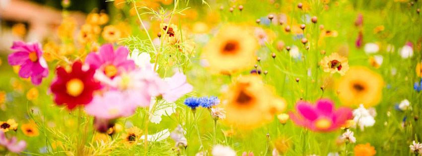 Oferujemy nasiona kwiatów w najwyższej jakości! Polecamy wszystkim uprawę kwiatów w ogrodzie! Gwarantujemy bardzo duży wybór odmian i gatunków oraz bujne kwitnienie! Szybko realizujemy każde zamówienie!