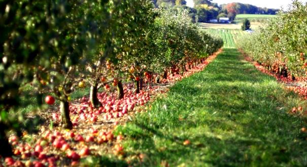 Drzewka owocowe we własnym ogrodzie pozwalają na uprawę swoich własnych owoców! Przekonaj sie jak wielką frajdę sprawia posiadanie swoich własnych owoców. Gwarantujemy wysoką jakość i szybką dostawę!