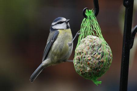 Sikorka pokarm dla ptaków