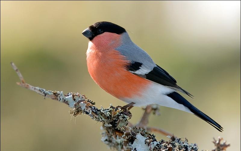 Czy Wiesz Jakie Ptaki Odwiedzają Twój Karmnik