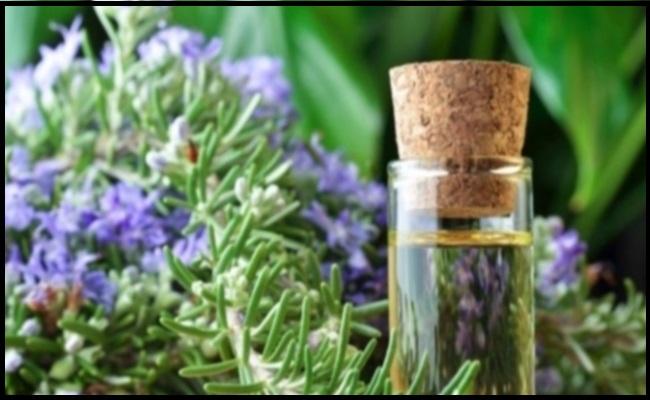 Vilmorin nasiona Beauty & Spa