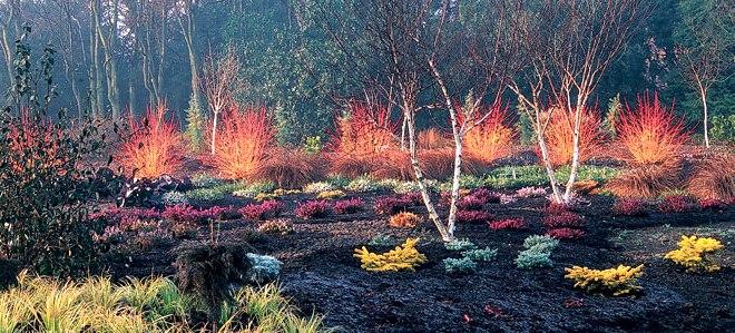 Jak ożywić ogród zimą